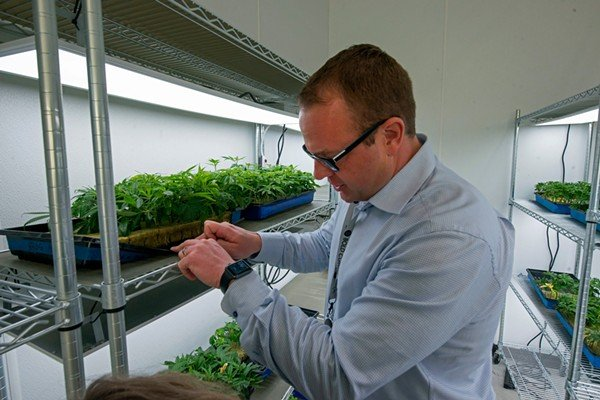 CLONES: Robert Lercher shows the rockwool matrix the clones are placed in. - BRIAN CHILSON
