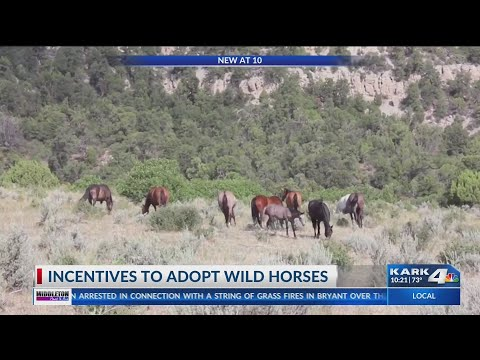 Incentives to Adopt Wild Horses