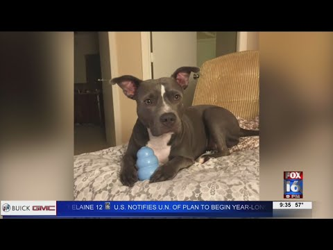VIDEO: Dog helped