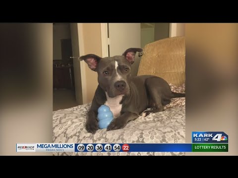 VIDEO: Dog recovers after rescue