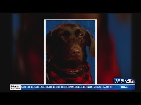 VIDEO: Service dog poses proudly for school picture, helps local elementary student