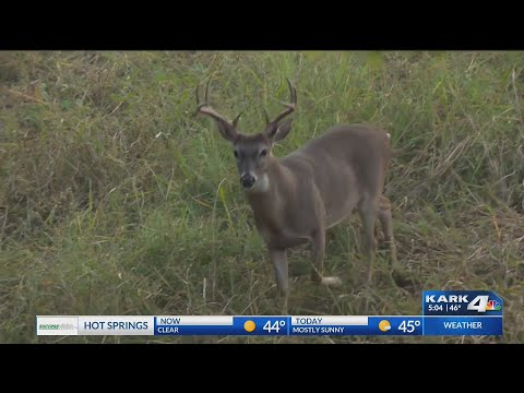 VIDEO: Deer becoming a nuisance for LR homeowners, how to save money and save them