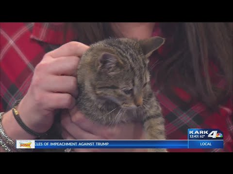 VIDEO: Holiday Hazards for Pets with Vet Blair