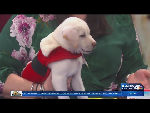 VIDEO: Winter Weather Hazards for Pets with Vet Blair