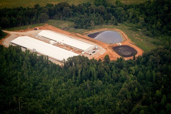 State announces closure of hog farm in Buffalo River watershed - Arkansas Times