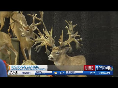 Watch: Big Buck Classic returns to the Arkansas State Fairgrounds this weekend