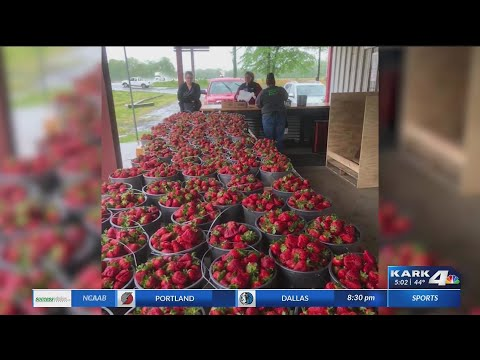 Watch: Highway widening project causes popular Cabot farm to relocate fruit stand