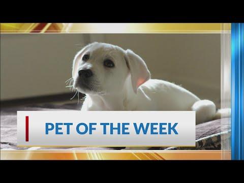 Watch: KARK 4 Today pet