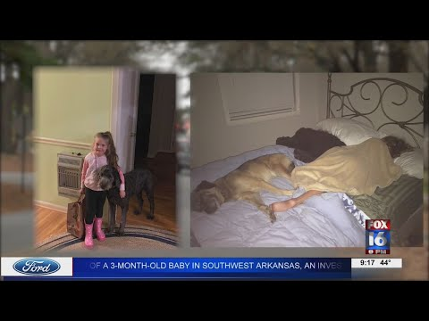 Watch: Thief caught on camera stealing Little Rock family's dog