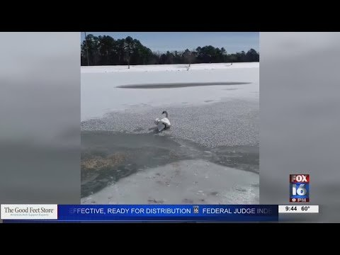 Watch: Maumelle woman uses crowbar to free frozen swan